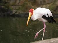 Eine Art Storch im Vogelpark