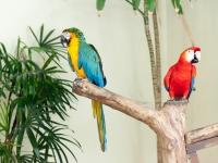 Papageien im Vogelpark