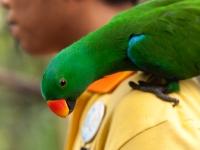 Papagei im Vogelpark