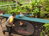 Papageienshow im Vogelpark