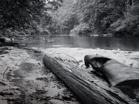 Nebenfluß des Sungai Tembeling