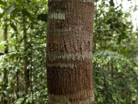 Getarnter Baum