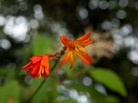 Pflanze mit roten Blüten