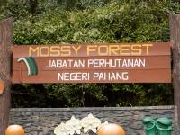 Mossy Forest Schild