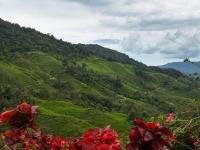Ausblick über Teeplantage
