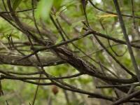 Versteckte Schlange