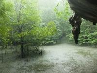 Regenschauer im Dschungel