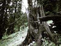 Holy Tree 2