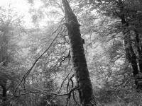 Holy Tree III