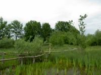 Biotope im Benediktbeurer Moor